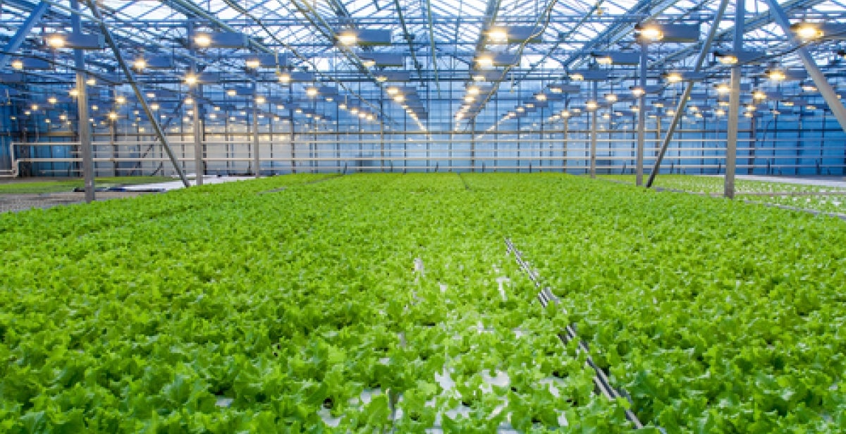 The Role of Engineers and Lean Manufacturing in Greenhouses blog header