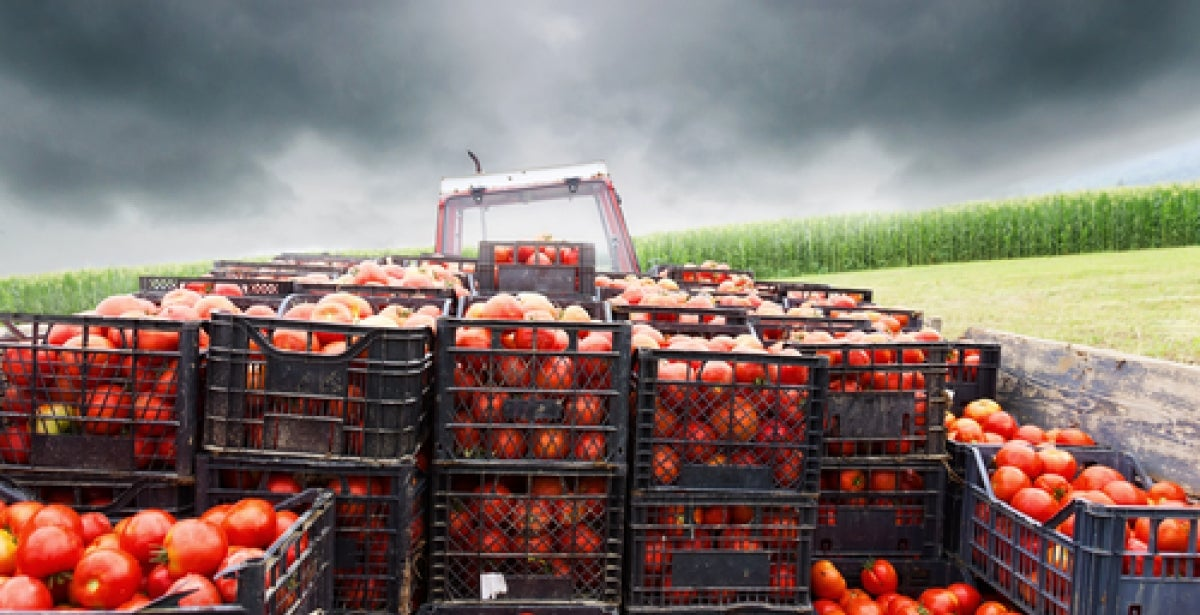 Supply Chain Challenges of Organic Food blog header